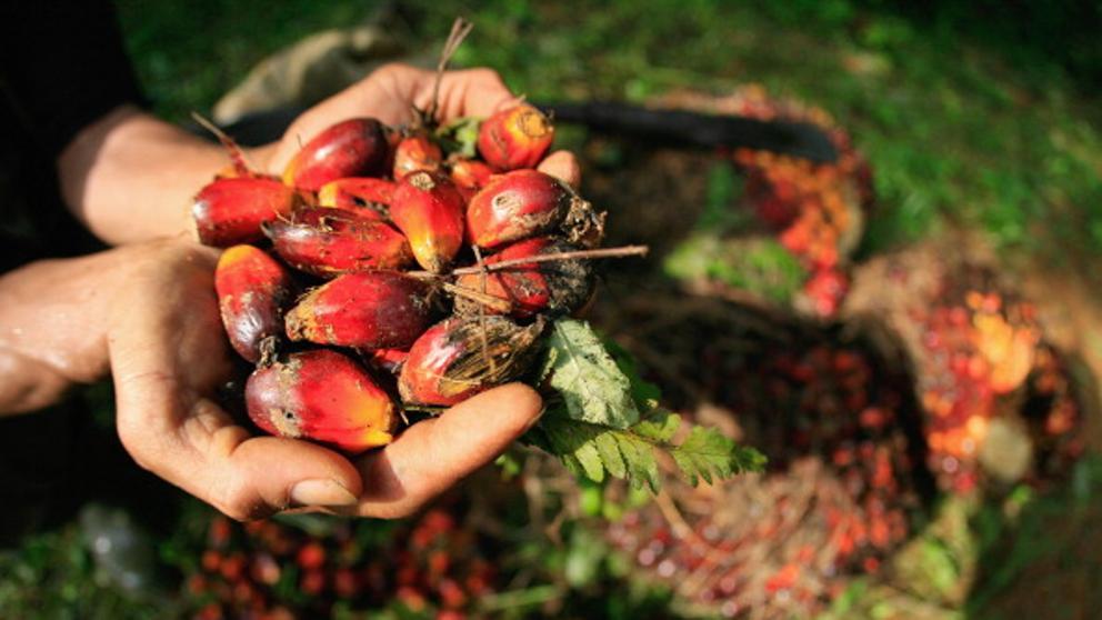 aceite de palma nutricionista