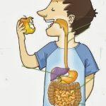 rumicion dietista nutricionista