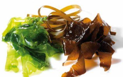 Comer algas: ¿es sano o no?
